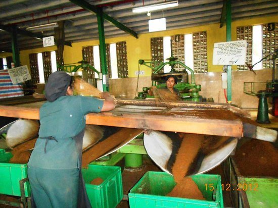 Heritance Tea Factory: Working Tea Factory En-route