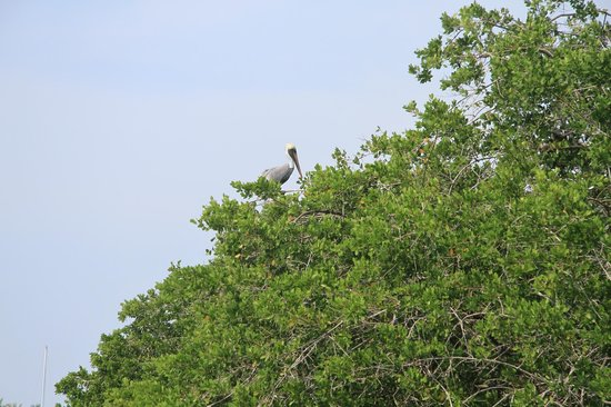 African Queen Steamboat Tour:                   same bird?