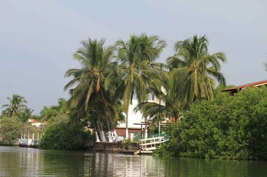 African Queen Steamboat Tour :                   lush foliage