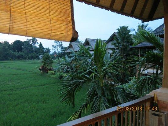 Tegal Sari:                   view