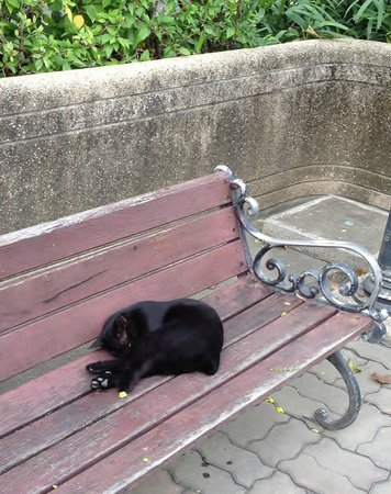 Benjasiri Park:                   ベンチャシリ公園の黒ねこ