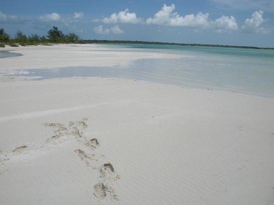 Caicos Dream Tours:                   Backside of Iguana Island
