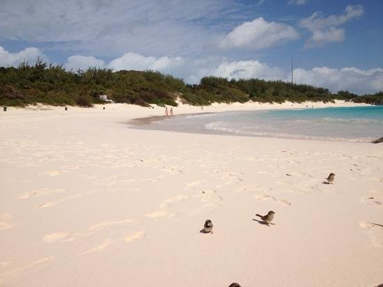 Horseshoe Bay Beach: sorry folks but we shared the beach with more sparrows than people today