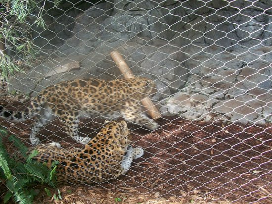 Big Cats Picture Of Central Florida Zoo Botanical Gardens Sanford Tripadvisor