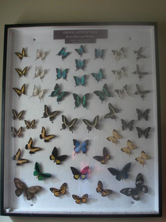 Central Florida Zoo & Botanical Gardens:                   Butterflies in Bug house