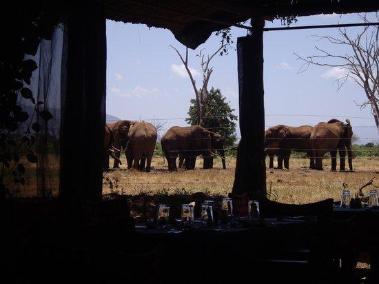 Sentrim Tsavo East: dal ristorante