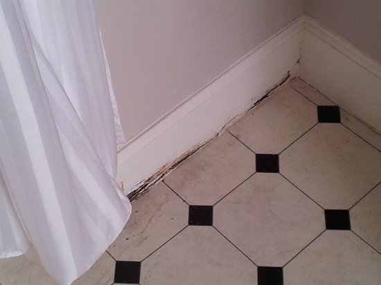 Cairnbaan Hotel :                   rotten skirting board in bathroom