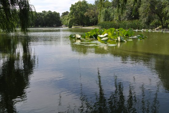 Part of the lake in Beiling Park