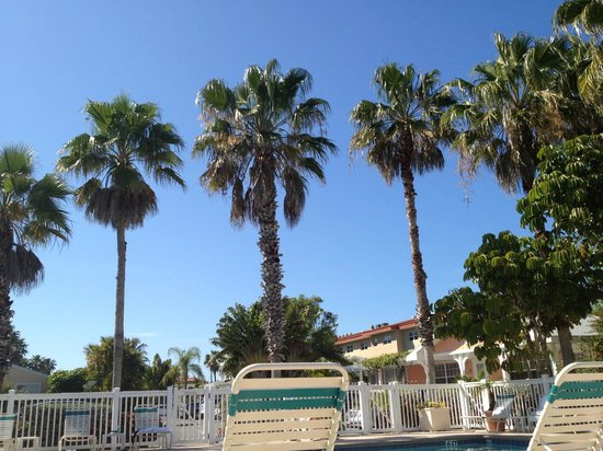 Tradewinds Beach Resort :                   View when you wake up from your nap by the pool.