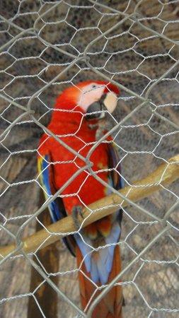 Barceló Montelimar Beach:                                                       zoo de l hotel