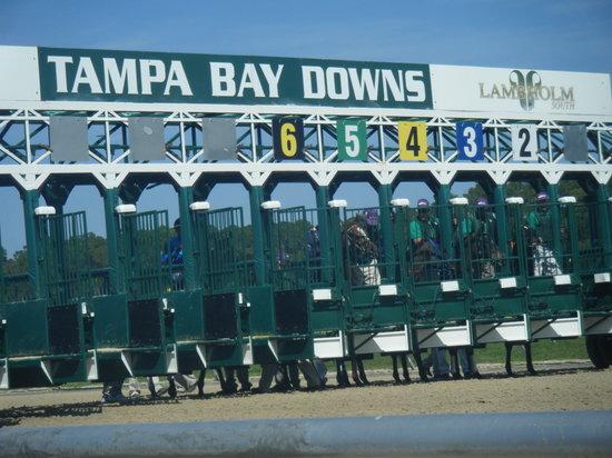 Tampa Bay Downs:                   gates