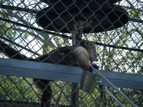 Suncoast Primate Sanctuary Foundation, Inc.:                   monkey feeding