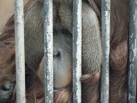 Suncoast Primate Sanctuary Foundation, Inc.:                   looks sad
