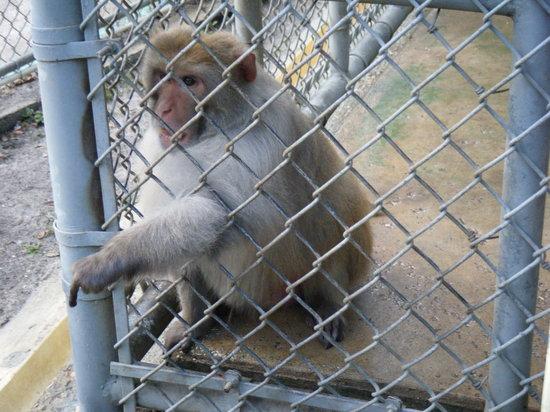 Suncoast Primate Sanctuary Foundation, Inc.:                   monkey
