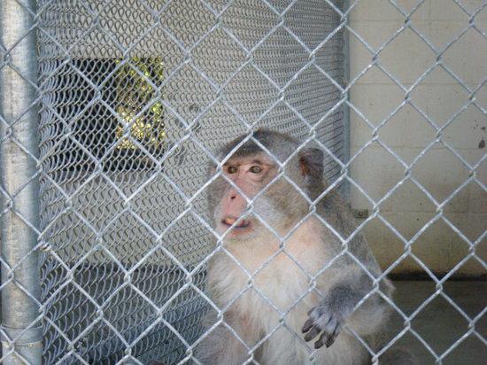Suncoast Primate Sanctuary Foundation, Inc.:                   cute