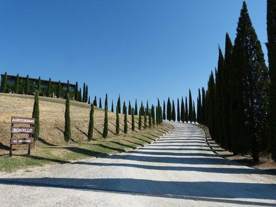 Agriturismo Bonello:                   Caminho de ciprestes