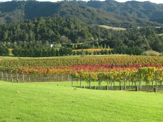 Lochiel Estate: The Vineyard in Autumn