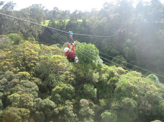 Piiholo Ranch Zipline:                                     Zipping!!