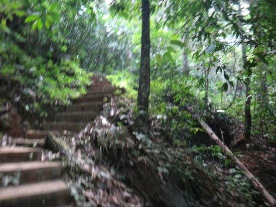 Camping Tad Thong:                   Trail
