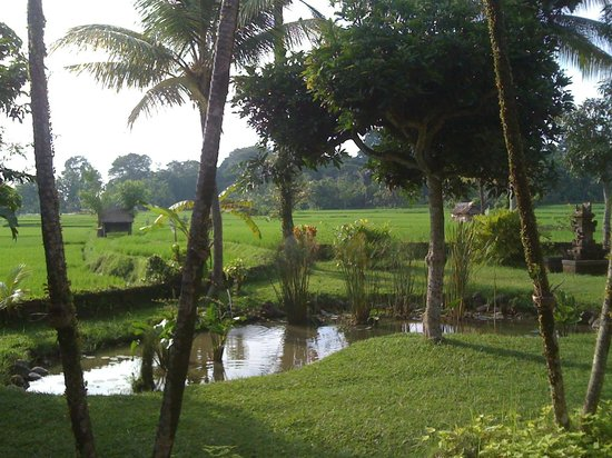 Tegal Sari:                   grounds of resort before the rice terraces