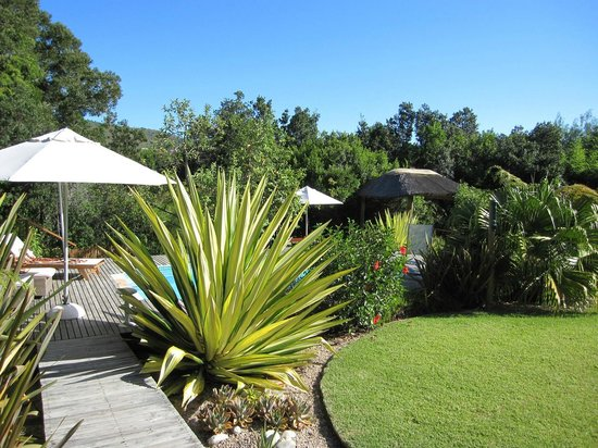 Armadillo Studios:                                     Pool & garden
