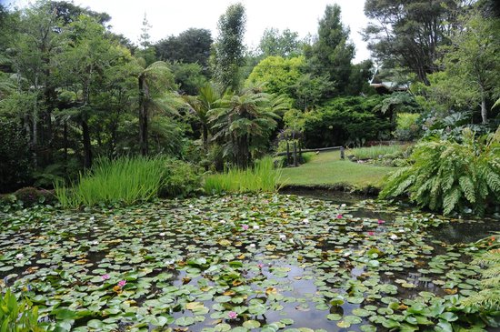 Rapaura Water Gardens:                                     Lily pond