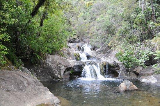 Rapaura Water Gardens:                                     Waterfall