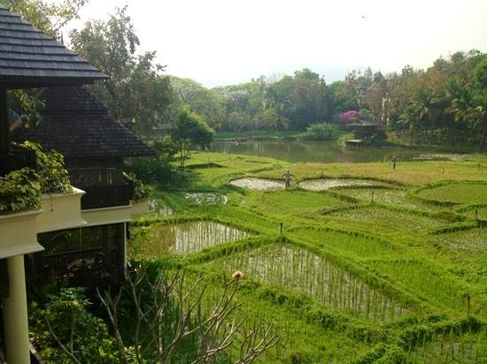Four Seasons Resort Chiang Mai :                   view from our room