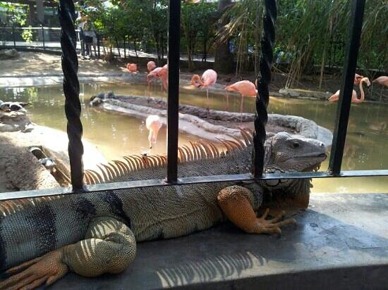 Barranquilla, Colombia:                   zoo