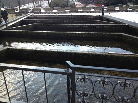 Vasche contenenti trote d 39 allevamento situate a fianco for Vasche per allevamento trote