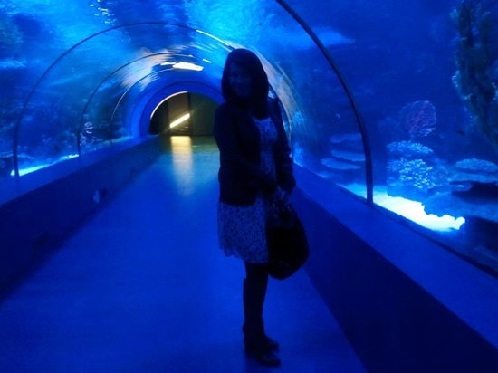Antalya Aquarim,31.8.12 - Picture of Antalya Aquarium ...