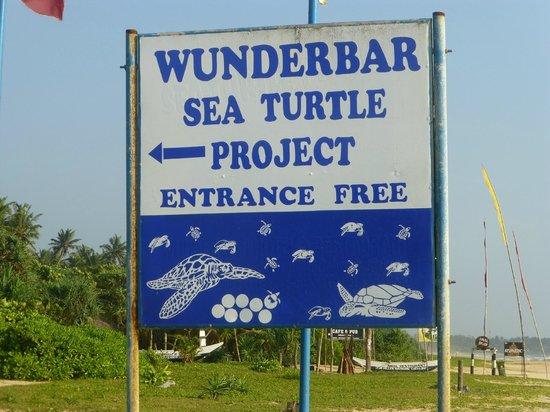 Wunderbar Beach Club Hotel: As it says --sea turtle project !