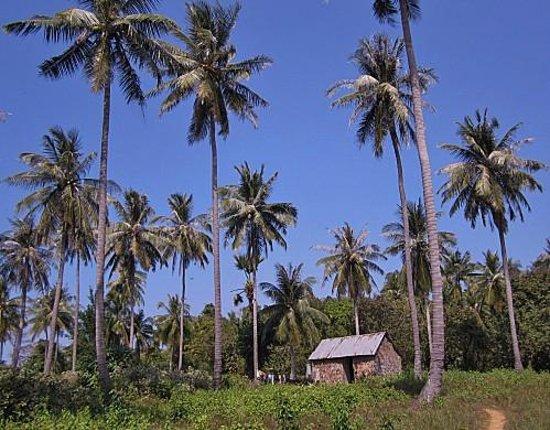 Kep, Camboya:                                                       Koh Tonsay (Rabbit Island)