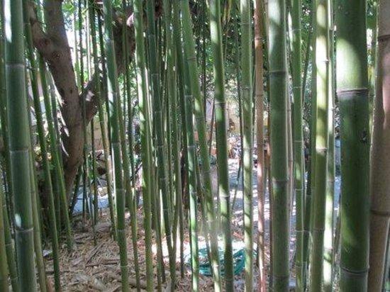 Moulin de la Croix : Les bambous