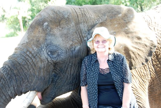 Adventures with Elephants:                   Mum on elephant's knee