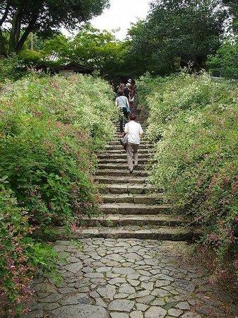 Byakugoji Temple:                   萩の花、満開です