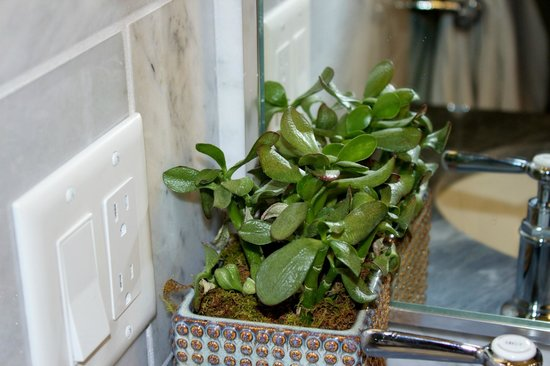 The St. Regis Aspen Resort:                   Live garden plant in bathroom