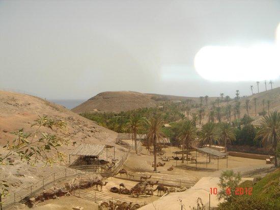 wielblad - Picture of Oasis Park Fuerteventura, Fuerteventura - TripAdvisor