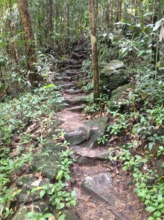 Mossman Gorge:                   along rain forest trail