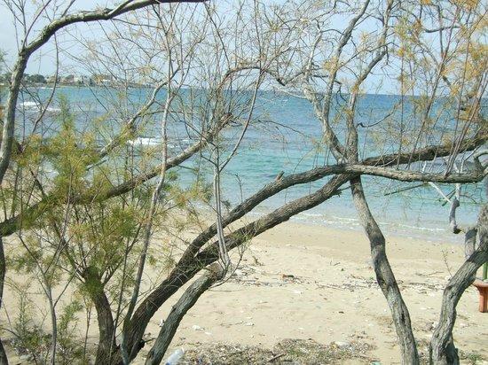 Riviera Beach Bungalows:                   Sandy beach