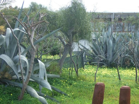 Riviera Beach Bungalows:                   Gardens