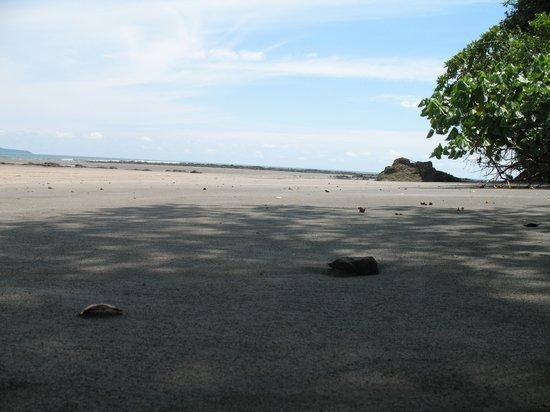 Hotel Sol y Mar:                   estero beach