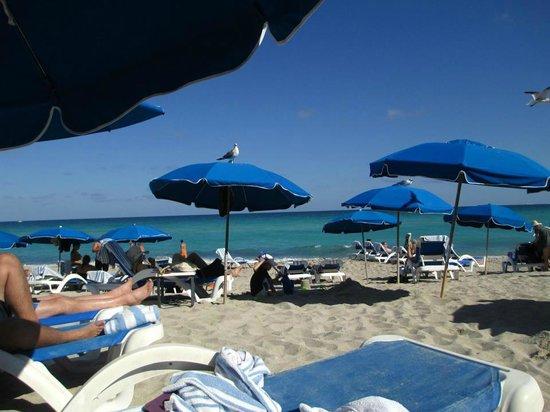 Trump International Beach Resort:                   The beach