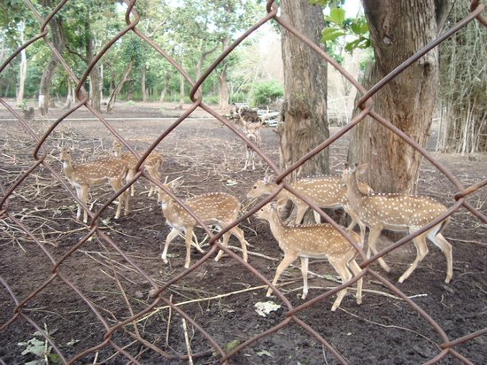 Club Mahindra Madikeri, Coorg :                   Its a Zoo taken for Site seeing