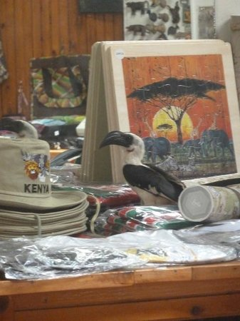 Voyager Ziwani, Tsavo West:                   Hornbill stuck in the shop until opening hours