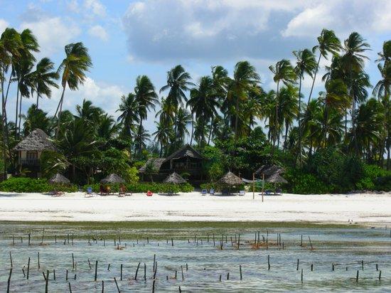 Nyota Beach Bungalows:                   Vista