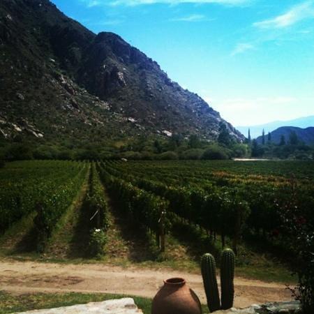 Cafayate, Argentina:                   viñedos de finca las Nubes