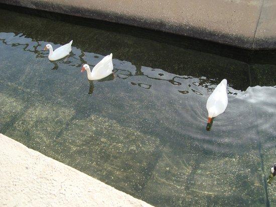 Three Little Ducks ;) (doha zoo, 2011)