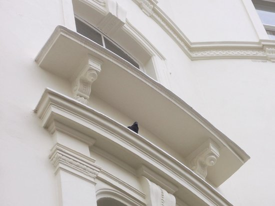 Prince's Square Apartments:                   pigeon guard