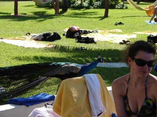 Grand Oasis Cancun:                   Gente que estaba recostada en el pasto.